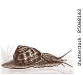 Snail   Vintage Engraved...