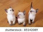 Stock photo little kittens 85142089