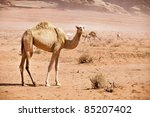 group of wild camels in the Wadi Rum desert - stock photo