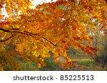 Autum Golden Tree Abstract