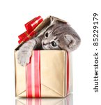 Stock photo funny kitten in golden gift box isolated on white 85229179