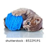 Stock photo funny gray kitten and ball of thread isolated on white 85229191