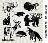 Set Of Wild Animals Hand Drawn
