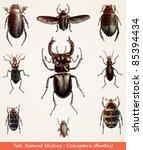Beetles   Vintage Engraved...