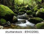 yakushima forest   Shutterstock . vector #85432081