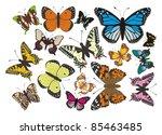 butterflies   complet vector | Shutterstock .eps vector #85463485