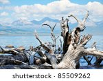Wild Nature. Dead Trees On The...