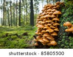 Wild Mushroom On Mossy Trunk In ...