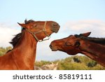 two brown horses fighting | Shutterstock . vector #85819111