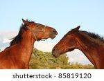 two brown horses fighting   Shutterstock . vector #85819120