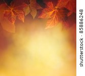 autumn design background with... | Shutterstock . vector #85886248