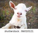 funny rural little goat kid... | Shutterstock . vector #86010121