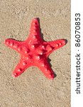 Red sea star on sand - stock photo