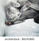 Stock photo funny cat laying indoors natural colors close up photo 86141860