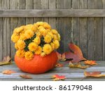 Mums Planted In A Gourd On A...