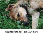 cute puppy lying on green grass | Shutterstock . vector #86264584