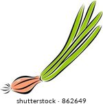 onion. check my portfolio for... | Shutterstock .eps vector #862649