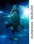 Shark Silhouette Underwater....