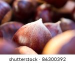 chestnut - stock photo