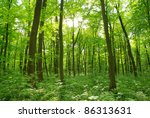 forest landscape in the morning | Shutterstock . vector #86313631
