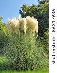 Pampas Grass In A Garden