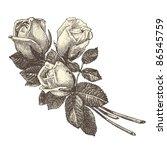 Roses   Vintage Engraved...