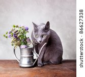 Cat With Flowers In Old...