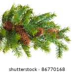 Pine Cones With Pine Branches....