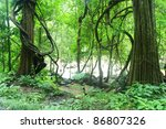 Deep Forest In Chiang Mai ...