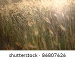 Brown Grass With Sunshine In...