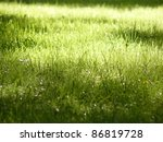 Solar Lawn With Green Grass In...