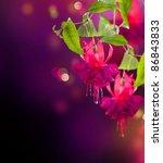 Fuchsia Flowers Design