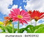 Daisy flowers close up over a blue sky - stock photo