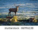 Deer And Herd Of Elk Looking A...
