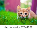 Stock photo young red cat kitten in grass outdoor shot at sunny day 87044522