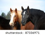 Palomino Horse And Black Horse...