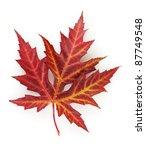 vivid autumn maple leaf... | Shutterstock . vector #87749548