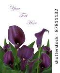Purple Calla Lily Background