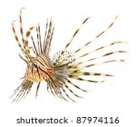 Lion Fish Isolated On White...