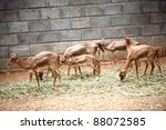 deer and fawns | Shutterstock . vector #88072585