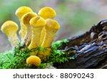 Orange Fungi Growing On Aaa...