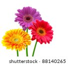 Stock photo gerber flower isolated on white background 88140265