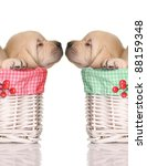 Stock photo puppy love sleeping puppies in red and green christmas baskets 88159348