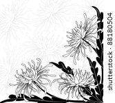 chrysanthemum, floral background  in black and white colors - stock vector