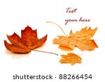 Autumn Maple Leaf Isolated On...
