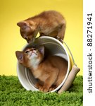 Stock photo abyssinian kittens age month 88271941