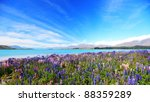 lupines field at lake tekapo ... | Shutterstock . vector #88359289