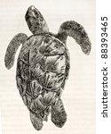 Loggerhead Sea Turtle Old...