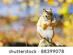 Cute Red Squirrel Eating Nut...