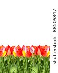 bunch of tulips isolated on a... | Shutterstock . vector #88509847